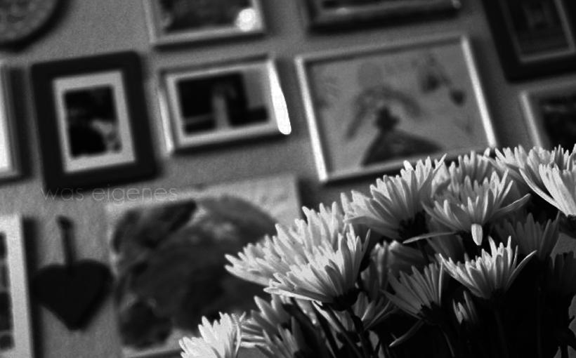 Bilder 1 Titel grau