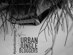 Urban Jungle Bloggers - Pop color Plant, colour bunt, Pflanze, grün knallig, frisch, lebendig, aktion Bloggeraktion,