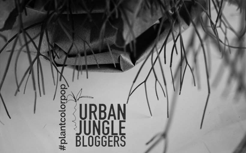 Urban Jungle Bloggers - Pop color Plant, colour bunt, Pflanze, grün knallig, frisch, lebendig, aktion Bloggeraktion,