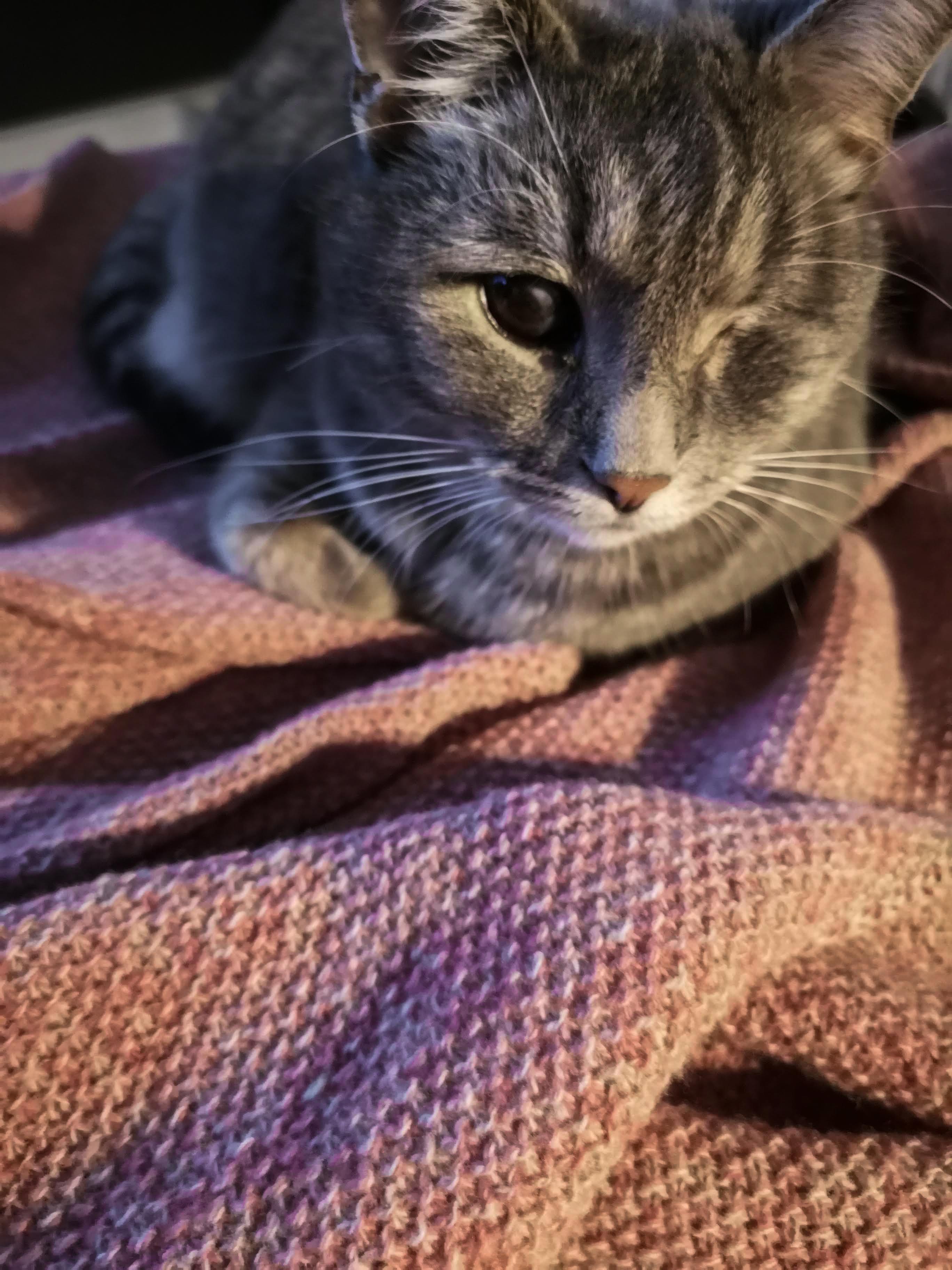 Katze auf der neuen Decke von Eagle Products - Kuscheliges Interior